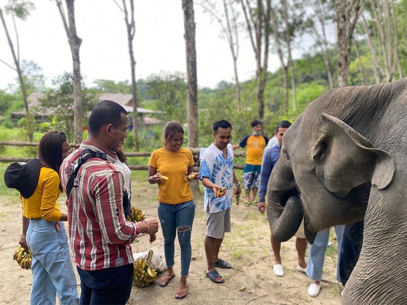 Yama-Punsuk – Elephants care